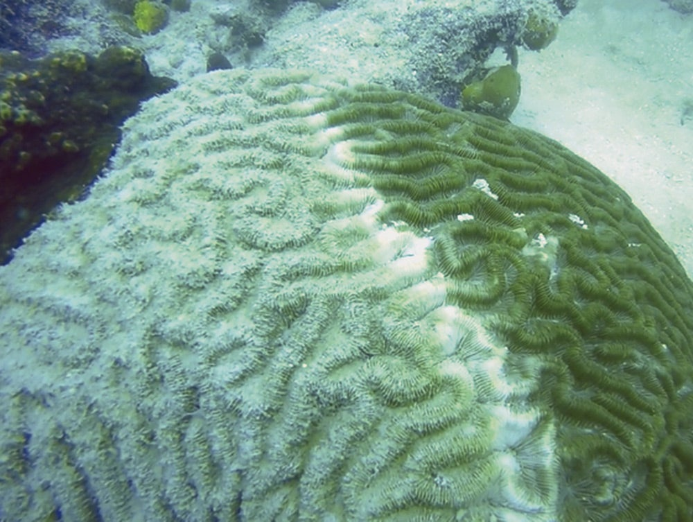 dying coral reef
