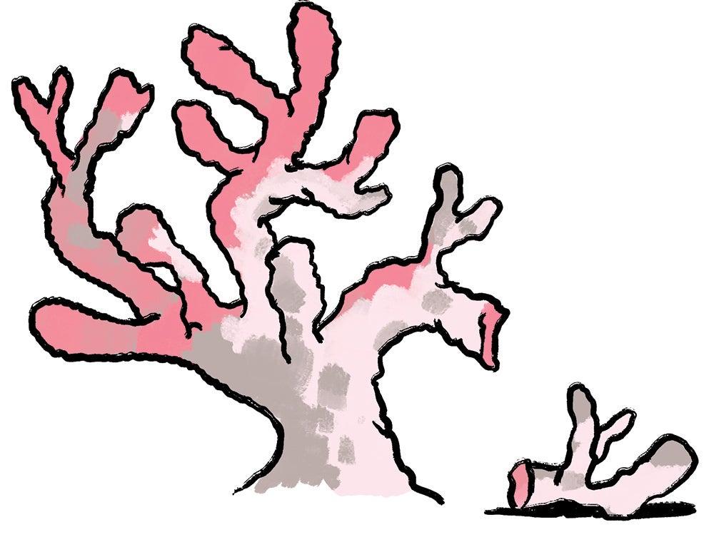 pink coral illustration