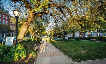 Urban forests are dying. Baltimore shows us how to bring them back.