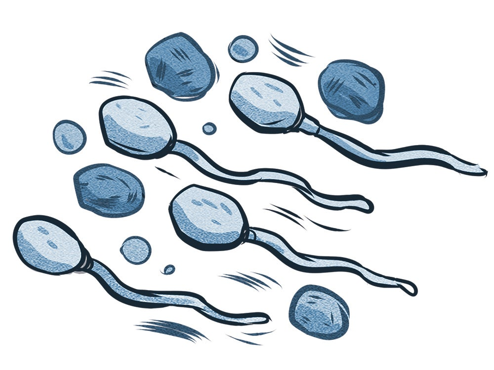 """""""sperm"""""""