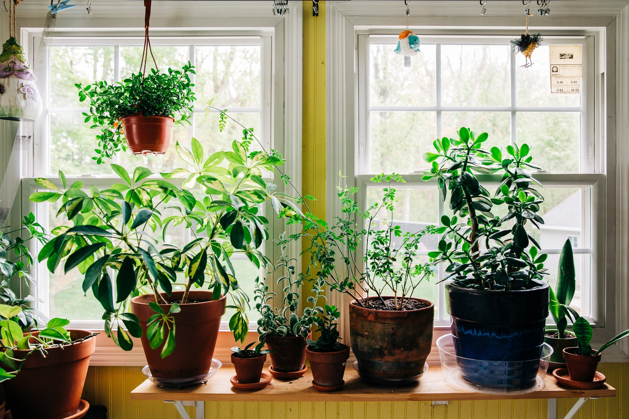 Need #plantshelfie inspiration? Here are the best submissions from PopSci readers