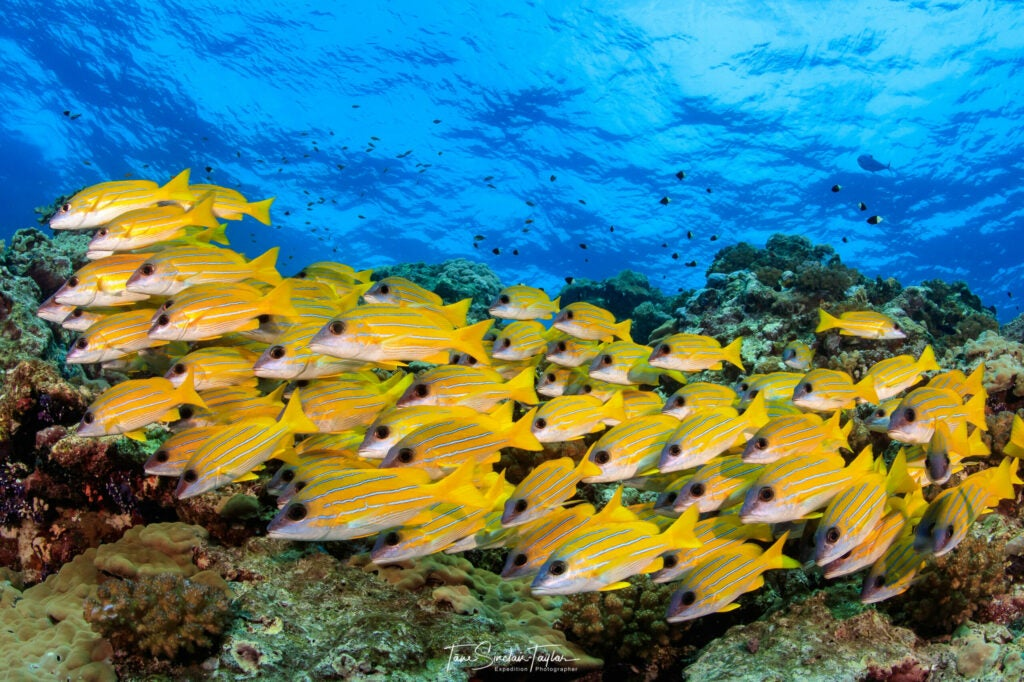 Reef fish gobies ecosystem