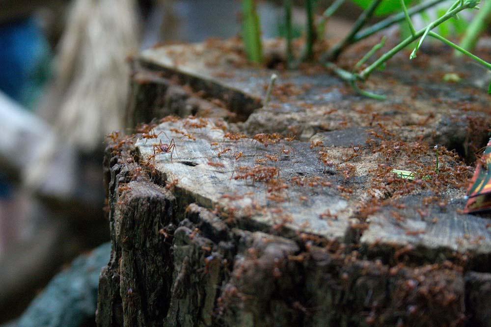 colony of Termites