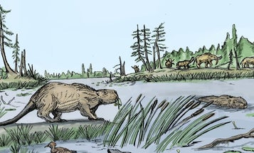 A warming climate spelled doom for giant ice-age beavers