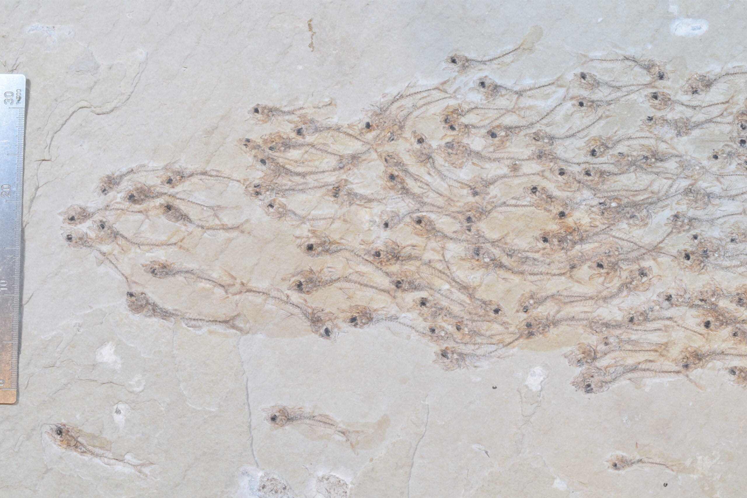fish shoal close up
