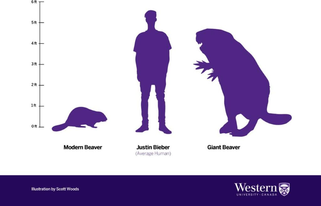 the modern beaver and Justin Bieber