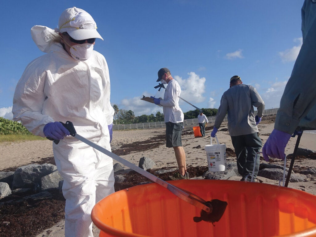 Workers collect fish killed by a huge bloom of Karenia brevis