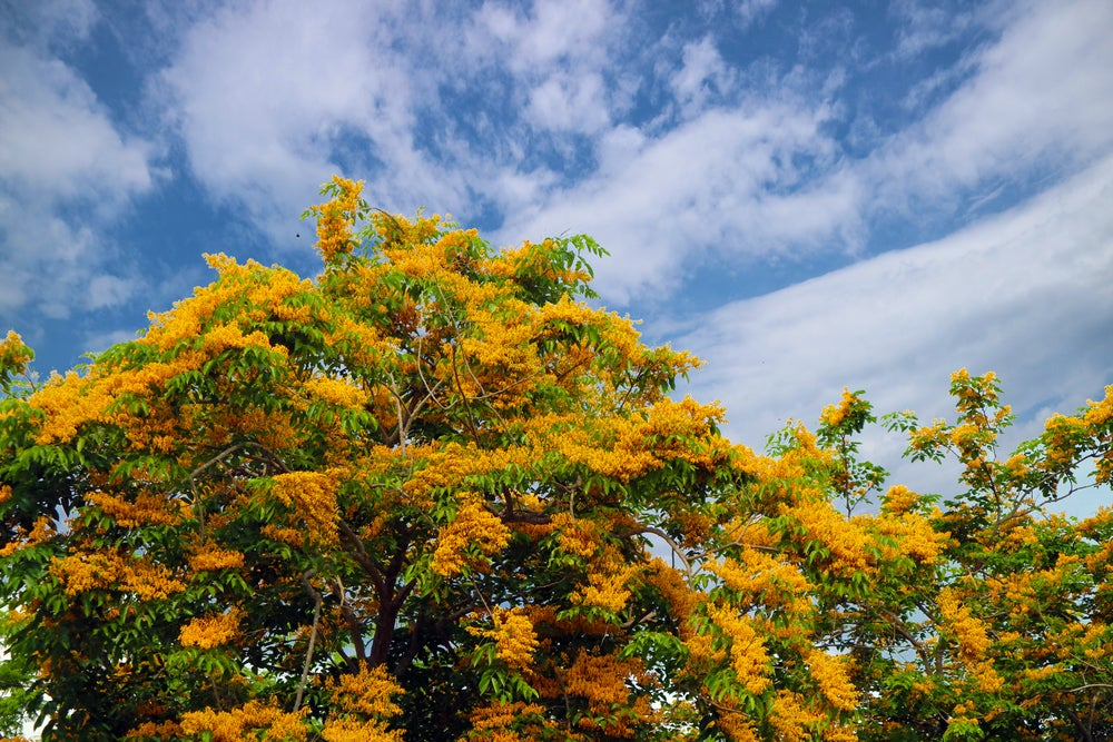 The Philippines wants to make planting trees a graduation requirement