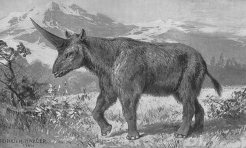 Siberian unicorns lived alongside humans, and they were so much cooler than the mythical version