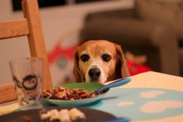Five Thanksgiving foods that are not safe for cats and dogs