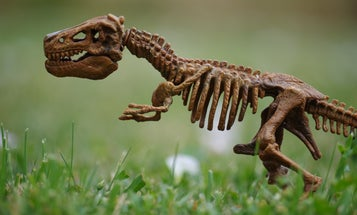 Dinosaur gifts for dinosaur people