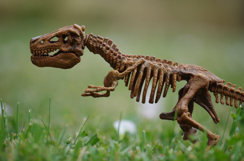 A model T-rex is great gift idea.