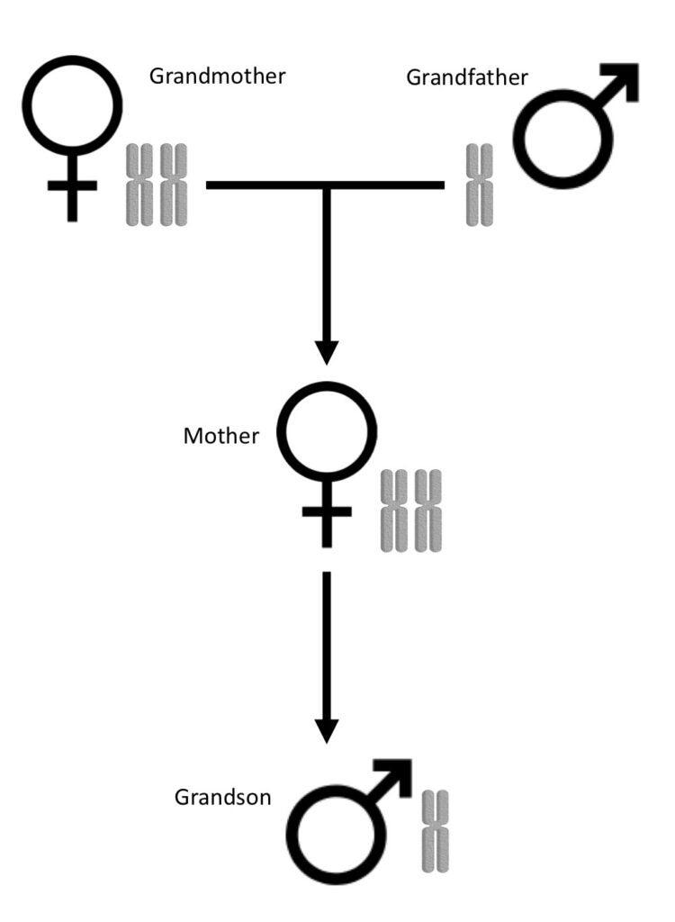 ant genealogy