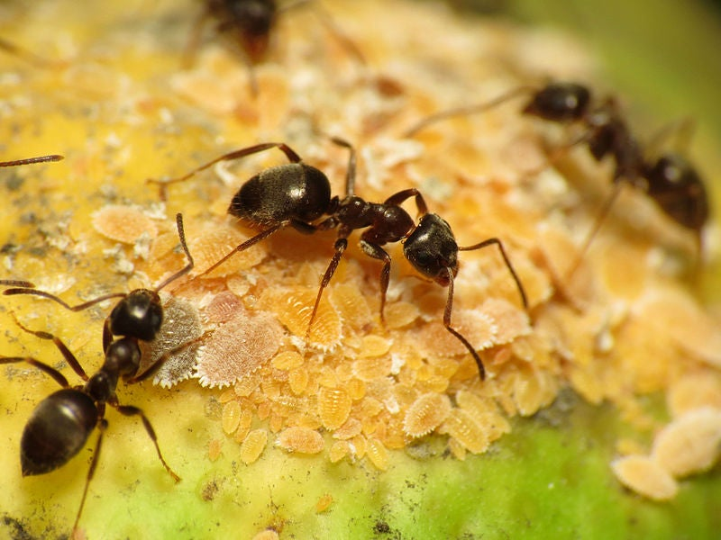 Male ants are pretty much just flying sperm (and other amazing ant facts)