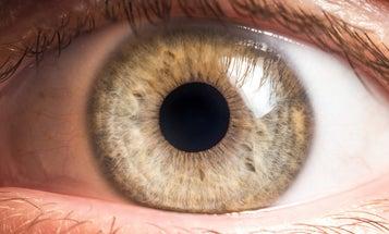 'Prob-eye-otics' could be the future of eye disease treatment
