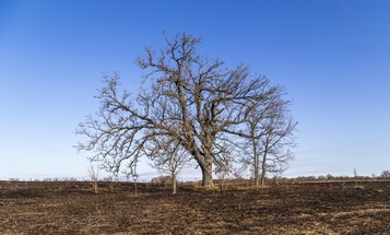 Some trees can make droughts worse