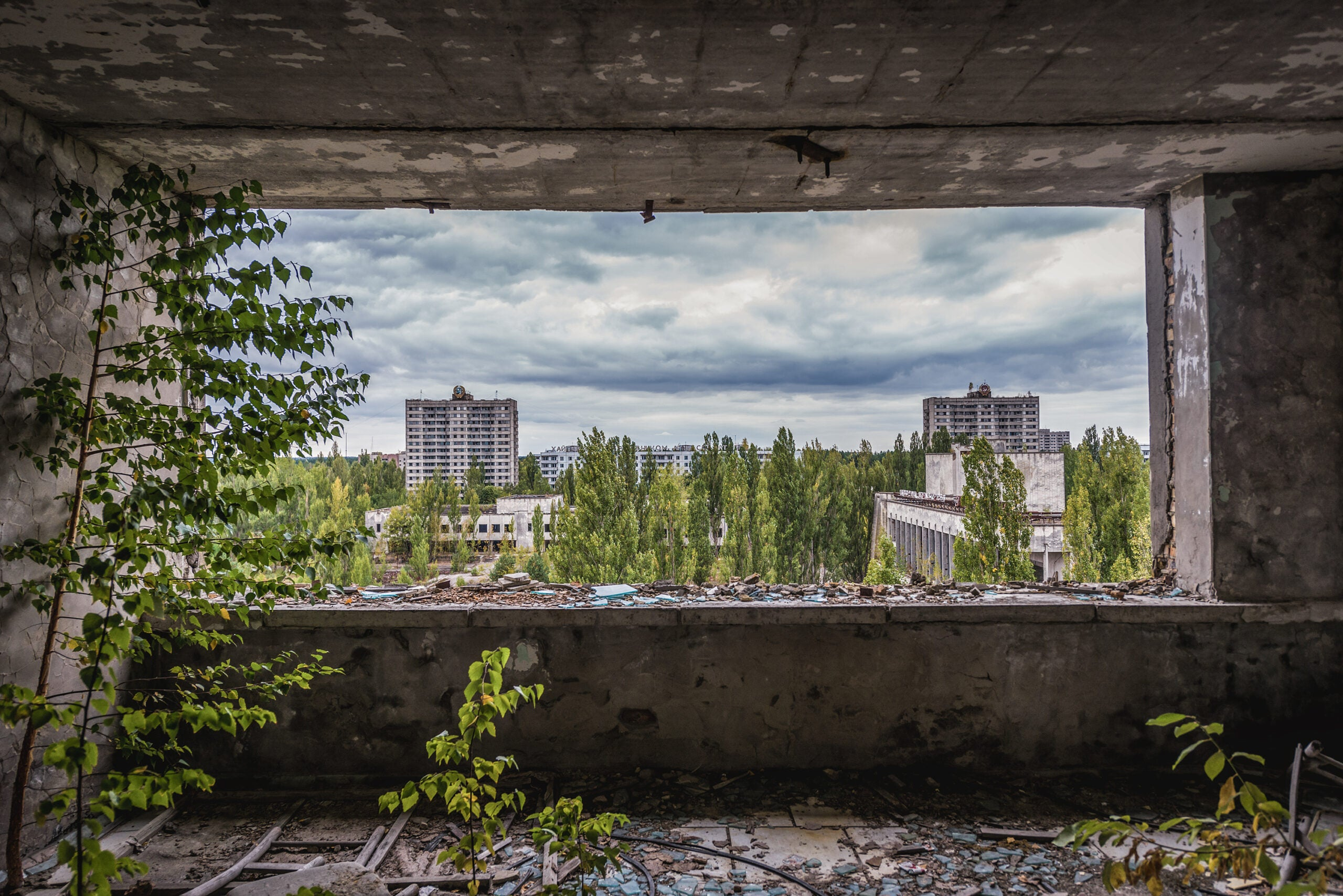 Plants couldn't run away from Chernobyl—but that's what saved them