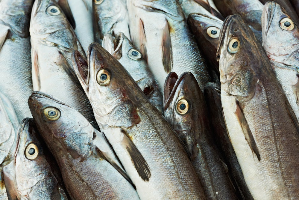 The Atlantic cod's migratory supergene comes at a cost