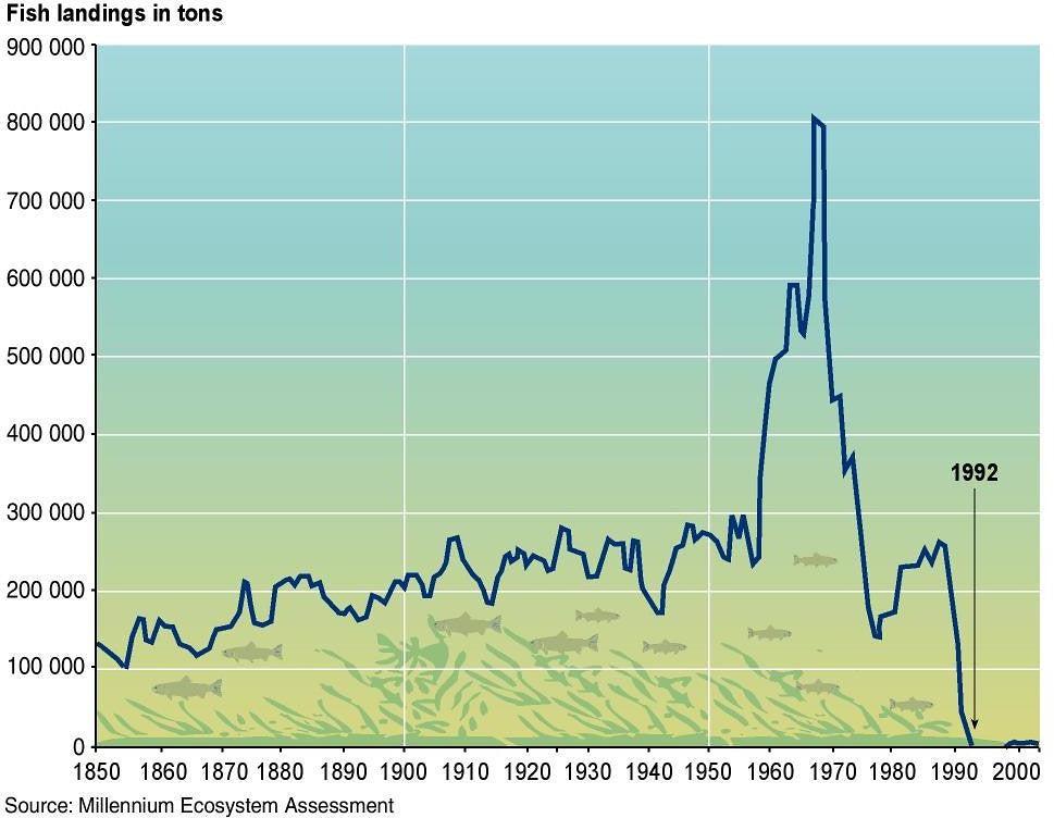 Cod millennium ecosystem assessment fish atlantic population crash ecology