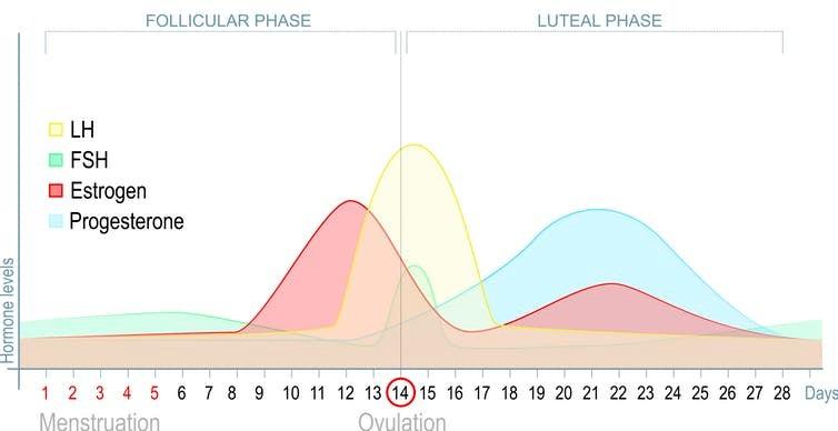 PMS symptoms chart