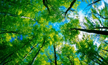 We can plant trees to save the planet. But it's harder than it sounds.