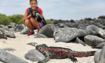 How to selfie responsibly, and other tips for not damaging wildlife on vacation