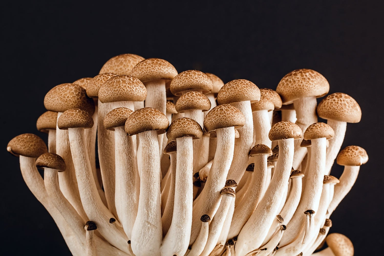 There's a deadly fungus among us—and it's spreading