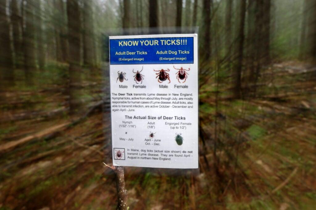 tick identification chart