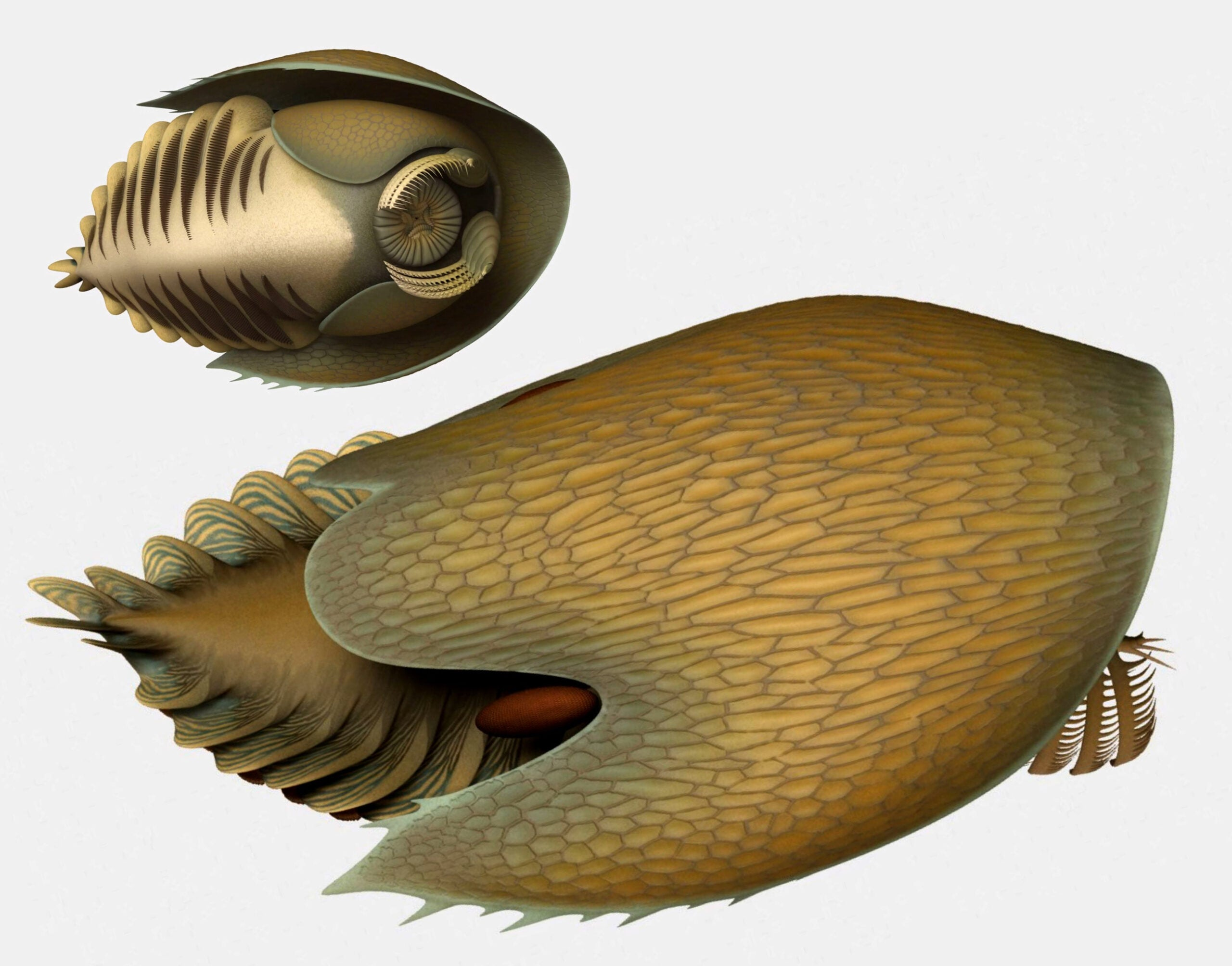 This ancient predator had claws like rakes and a body like a spaceship