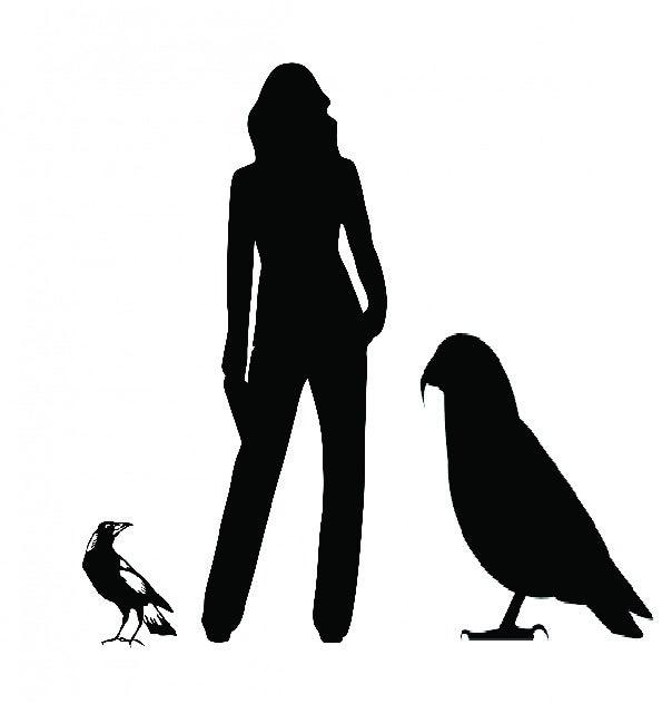 giant parrot comparison