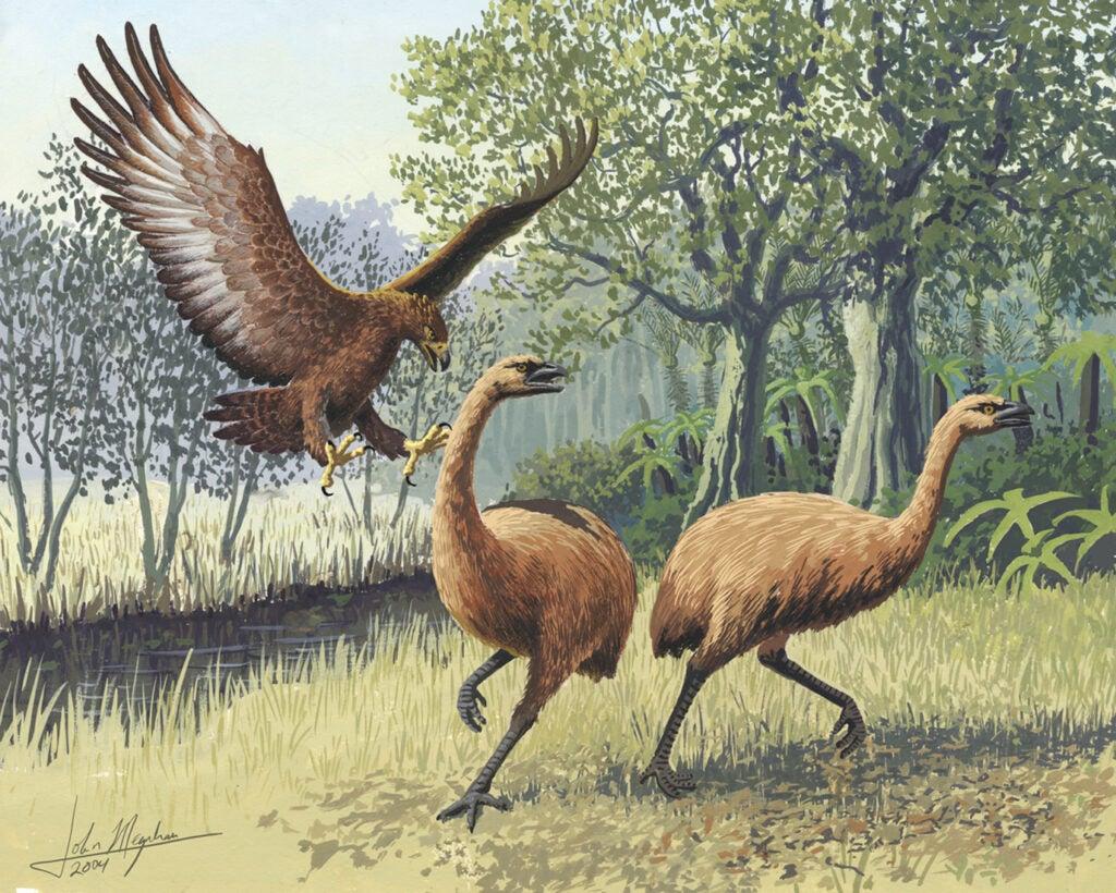 giant haasts eagle moa