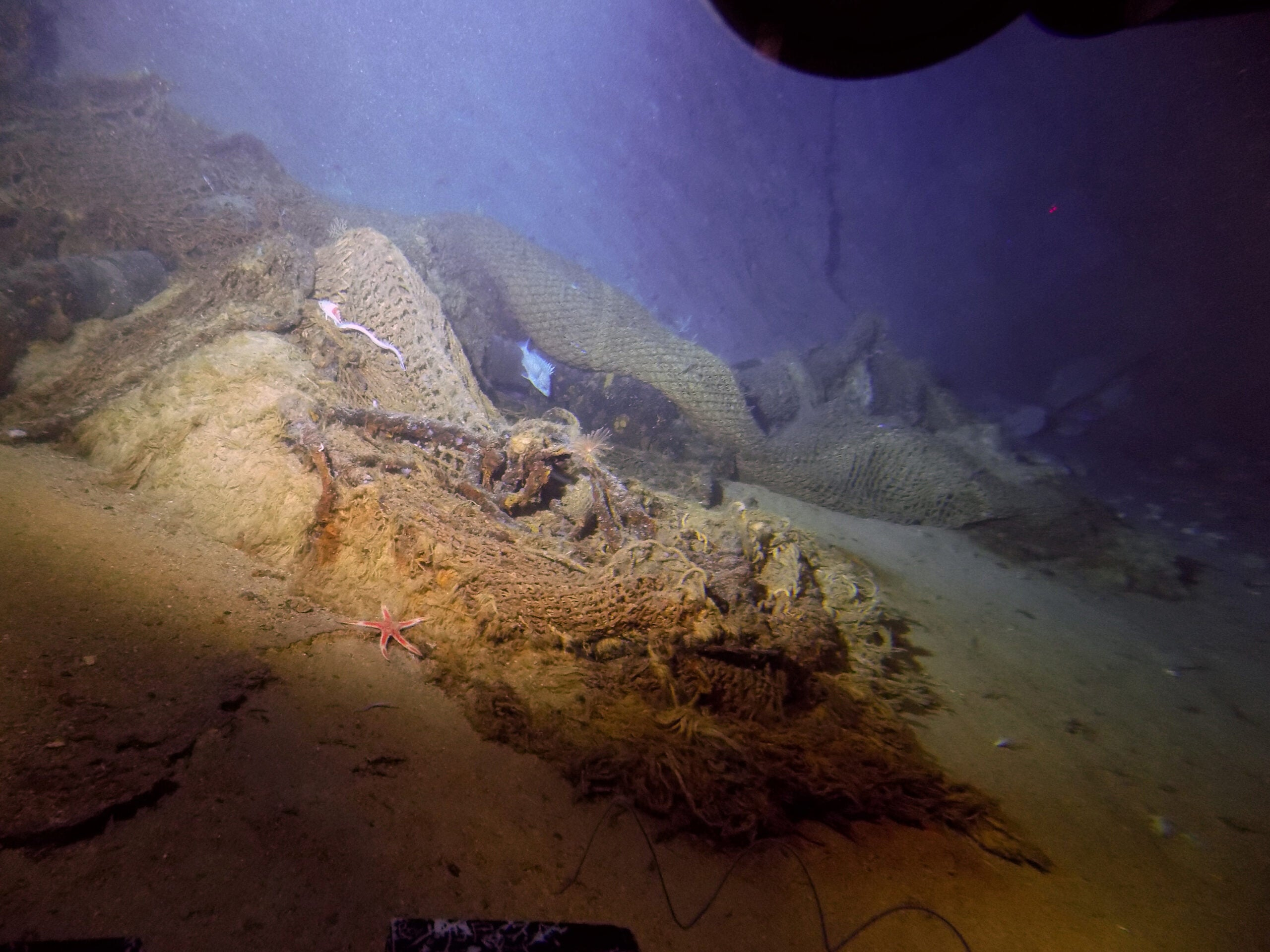 Fishing nets leave precious marine habitats broken and scarred—but some are coming back to life