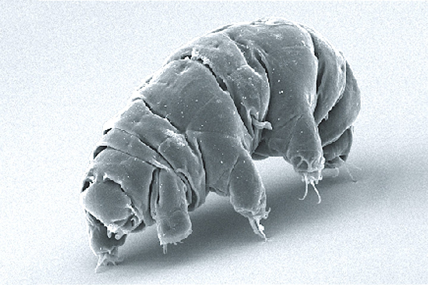 Tardigrades that crash-landed on the moon may still be alive, but they're not having fun