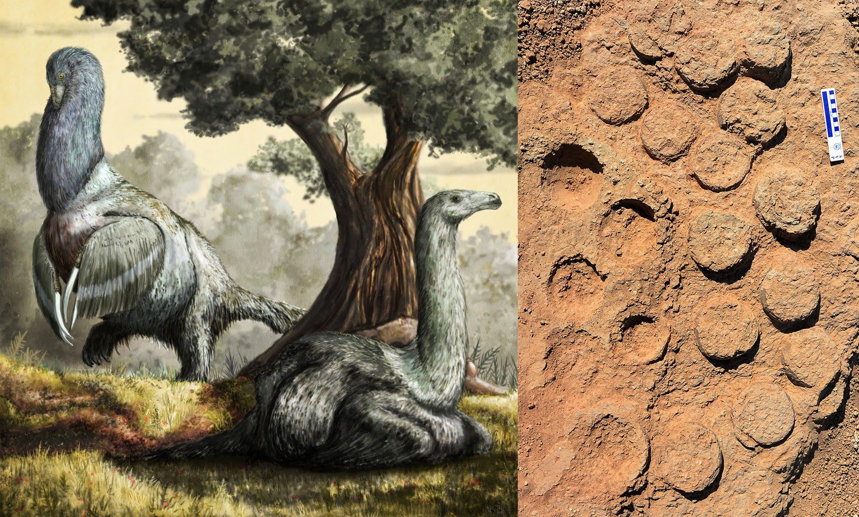 A dinosaur egg bonanza is helping ecologists understand prehistoric parenting