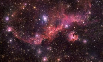 This seagull-shaped nebula is a hangout for baby stars