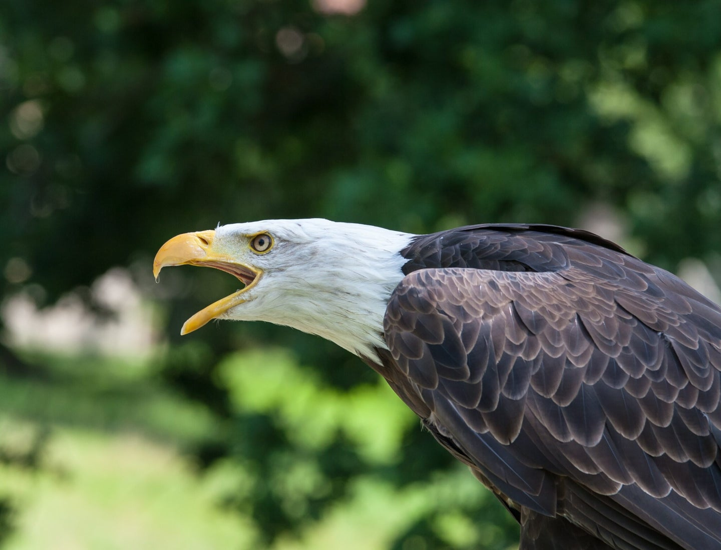 Trump is attacking the Endangered Species Act when we need it most
