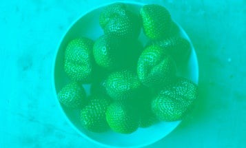 These strawberries aren't red. Here's why your brain is sure they are.