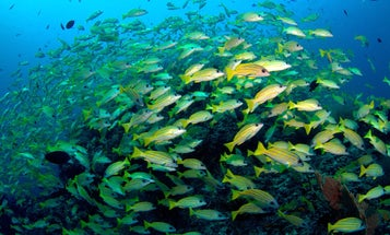 For picky eaters like the parrotfish, climate change is bad news
