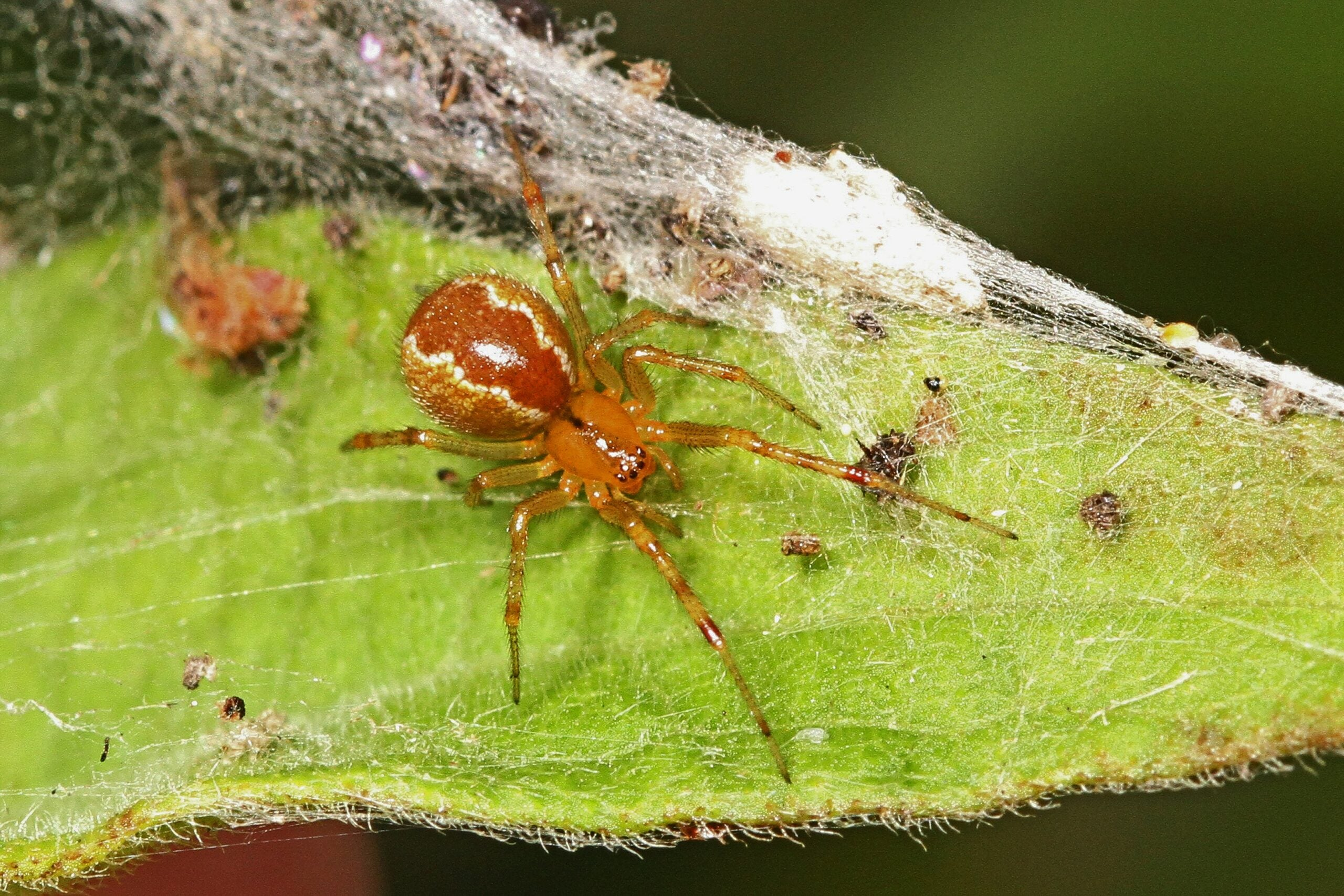 Extreme weather is making these spiders extra feisty