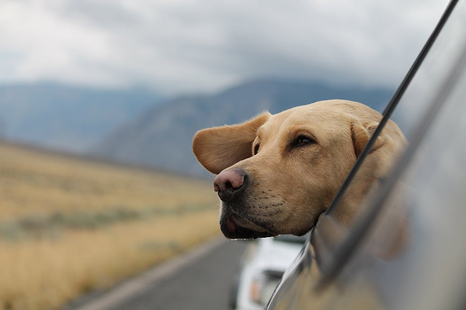 Essential travel kits for active pets