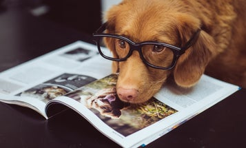Celebrate National Dog Day with 14 of the best doggone stories we've got