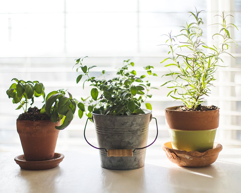 Indoor garden kits for any space