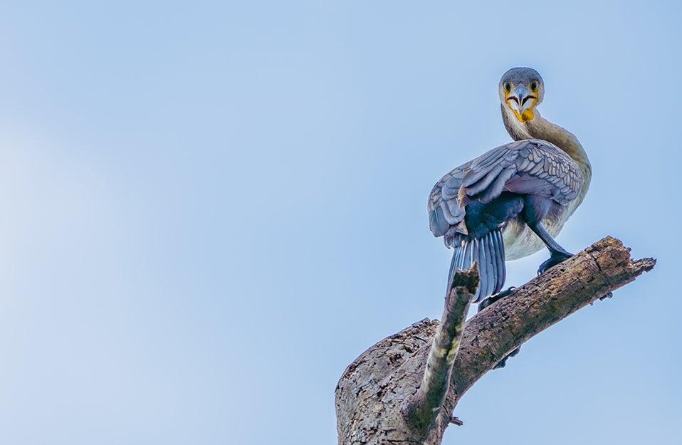 Binoculars for your birdwatching adventure