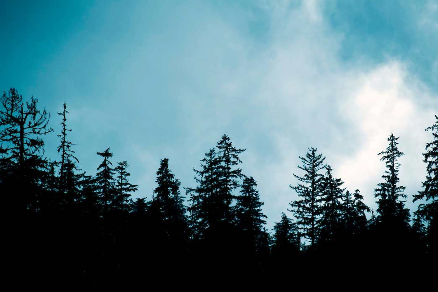 A silhouette of evergreen trees against a blue sky