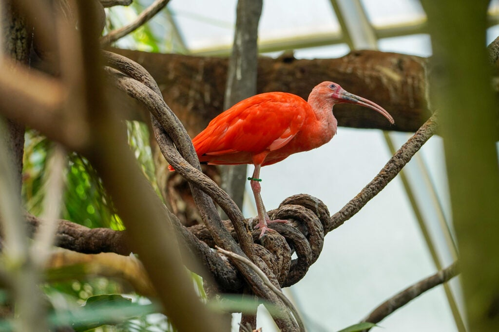 orange tropical bird