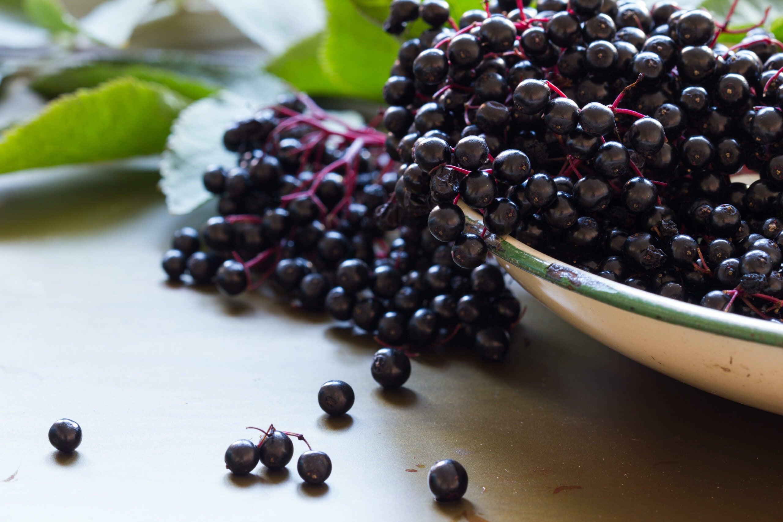 Black elderberries, Sambucus nigra, in enamel bowl with leaves on metal background. Copy space, selective focus, close up,