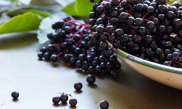 Eight tasty berries you can find in the wild