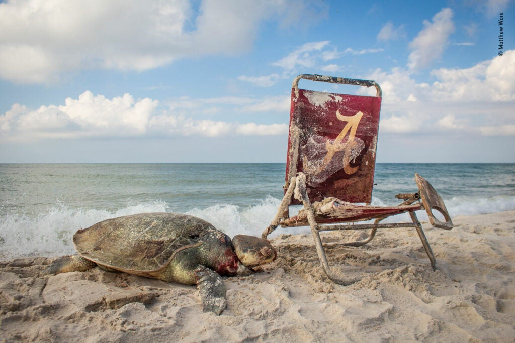 A turtle next to a beach chair tangled in trash