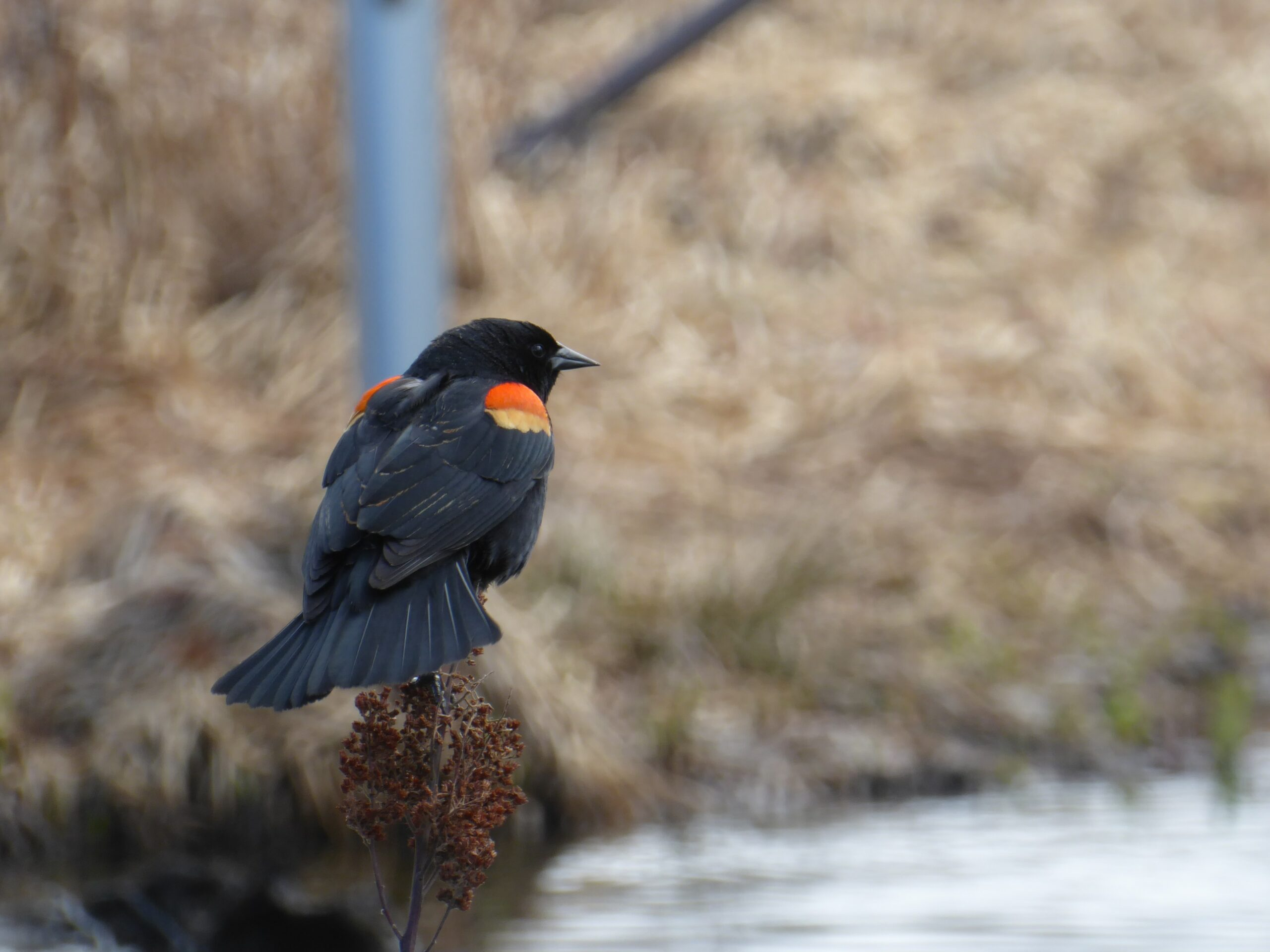 We've lost almost 3 billion birds in the U.S. and Canada since 1970