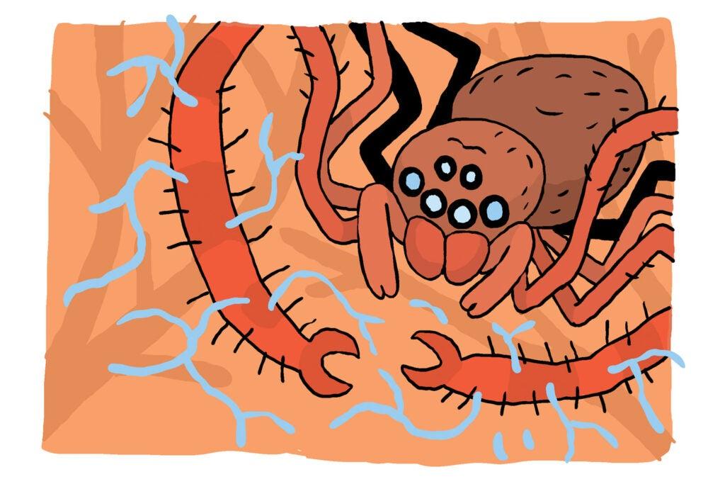 Sheet web spider illustration